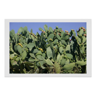 Prickly pears poster