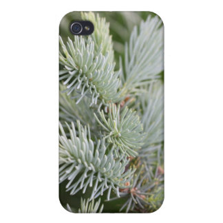 Prickly Pine iPhone 4/4S Cases