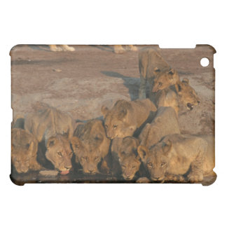 Pride of Lions Drinking iPad Mini Cover