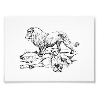 Pride of Lions Photographic Print