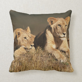 Pride of young male Lions Cushion