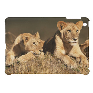 Pride of young male Lions iPad Mini Cases