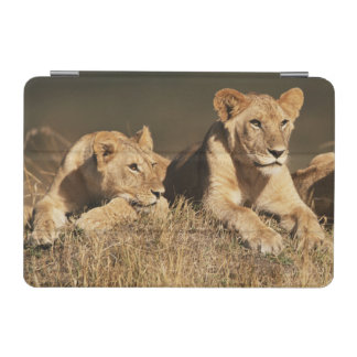 Pride of young male Lions iPad Mini Cover