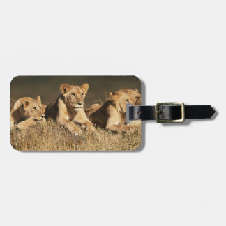 Pride of young male Lions Luggage Tag