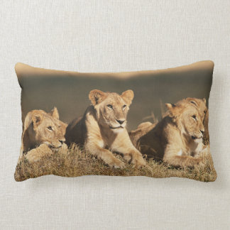 Pride of young male Lions Lumbar Cushion