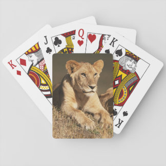 Pride of young male Lions Playing Cards