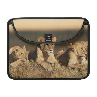Pride of young male Lions Sleeve For MacBook Pro