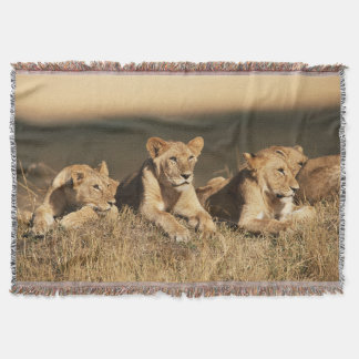 Pride of young male Lions Throw Blanket