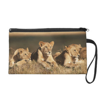 Pride of young male Lions Wristlet