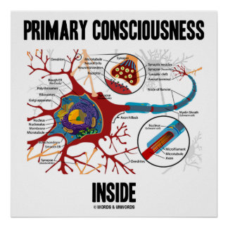 Primary Consciousness Inside (Neuron / Synapse) Poster