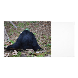primate from the back sitting animal photo cards