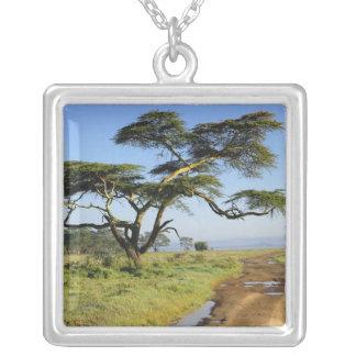 Primitive dirt road and acacia tree, Lake Nakuru Silver Plated Necklace