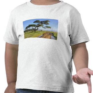 Primitive dirt road and acacia tree Lake Nakuru Shirts
