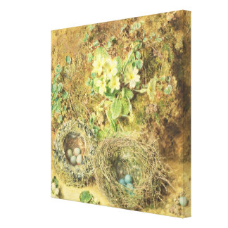 Primroses and Birds' Nests Canvas Print