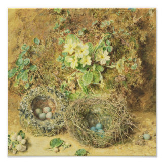 Primroses and Birds' Nests Poster