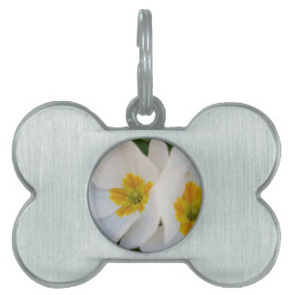 primroses in the garden pet ID tag