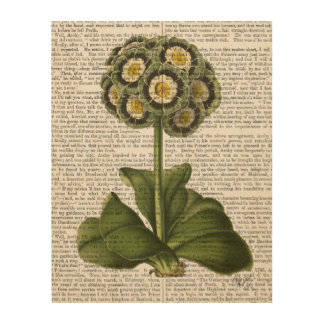 Primula Auricula Blue Wood Wall Decor