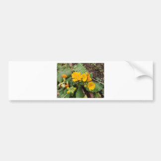 Primula Crescendo Golden Bumper Sticker