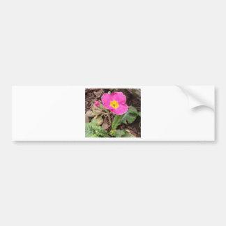 Primula Danova Purple White Edge Bumper Stickers
