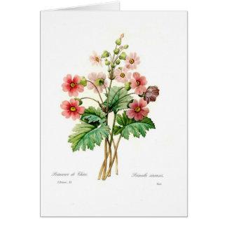 Primula sinensis greeting card