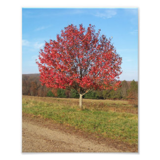 "print 8"" x 10"" beautiful red tree in the field"