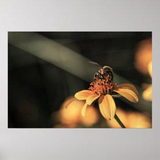 Print: Bee Gathering Pollen