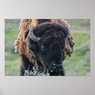 Print: Bison Portrait