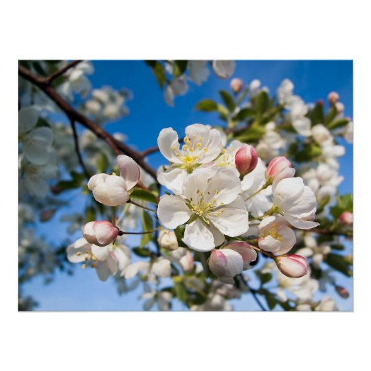Print - Crab Apple Blossoms