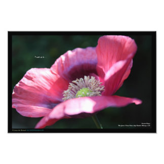 Print of Pink Oriental Poppy + Deva&Angel Message