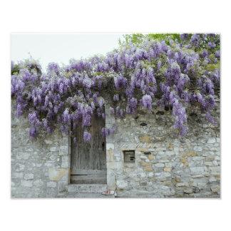 PRINT - Wisteria Viviers France