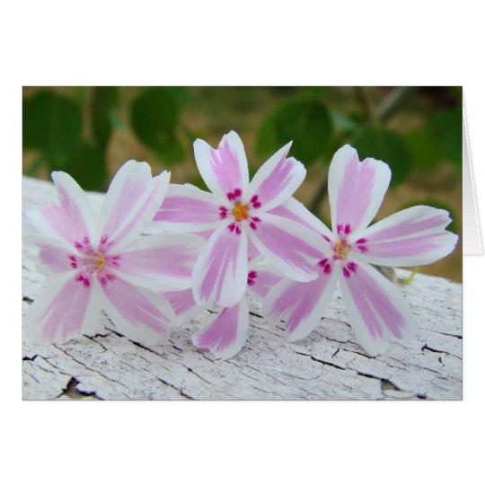 printemps etoile card