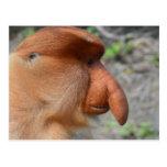 Proboscis Monkey Postcard