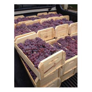 Production grape postcard