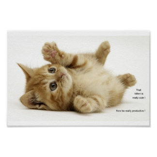 Productivity Kitten (Kitteh) Poster