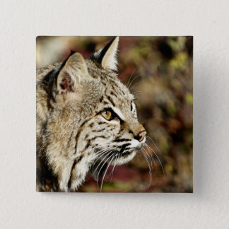 Profile of a Bobcat 15 Cm Square Badge
