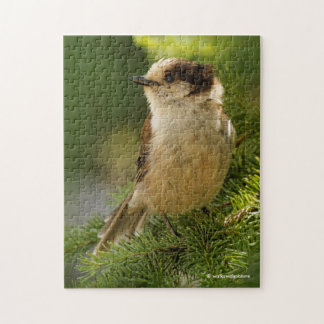 Profile of a Cute Grey Jay / Whiskeyjack Jigsaw Puzzle