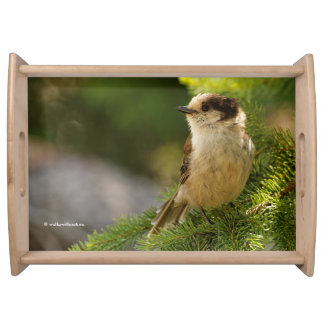 Profile of a Cute Grey Jay / Whiskeyjack Serving Tray