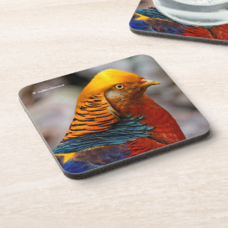 Profile of a Golden Red Pheasant Coaster