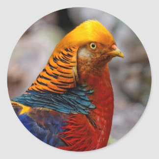 Profile of a Golden Red Pheasant Round Sticker