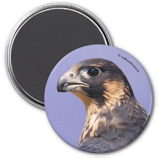 Profile of a Juvenile Peregrine Falcon 7.5 Cm Round Magnet
