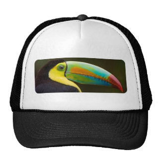Profile of a Keel-billed Toucan Cap