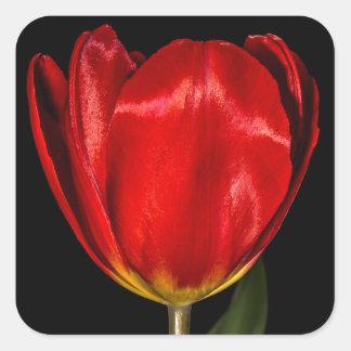 Profile of a Red Tulip Square Sticker