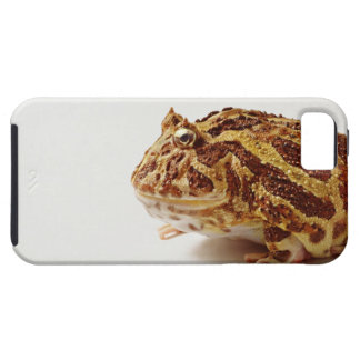 Profile of Argentine Horned Frog iPhone 5 Covers