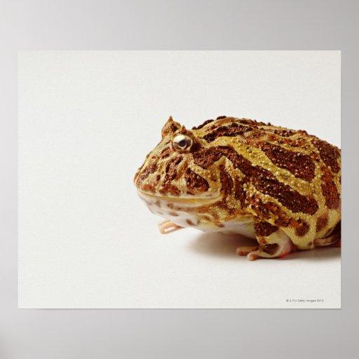 Profile of Argentine Horned Frog Print