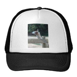 Profile of Llama Hats