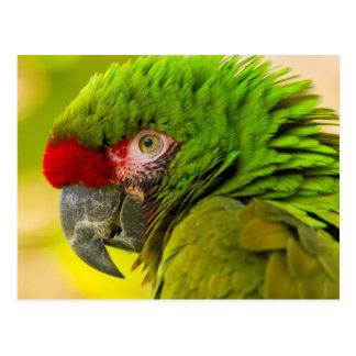 Profile of macaw at Santa Barbara Zoo Postcard