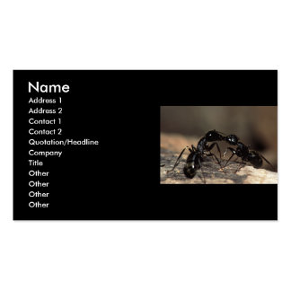 profile or business card, ants