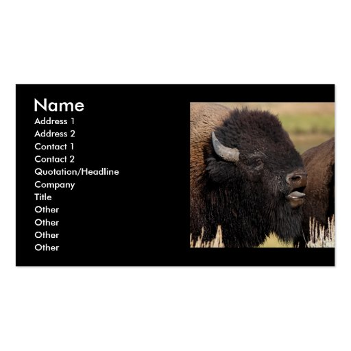 profile or business card, bison grunting