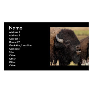 profile or business card, bison grunting pack of standard business cards