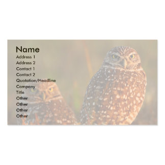 profile or business card, burrowing owls